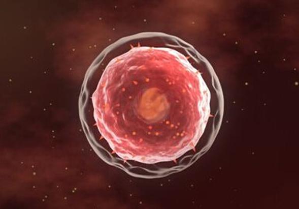 上海科医联创生物科技有限公司精准医学——免疫细胞治疗技术,联合手术、放疗、化疗治疗是趋势。