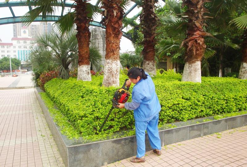 花草树木绿化及维护