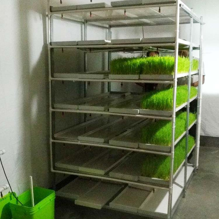 Indoor Hydroponic Growing Systems Complete Vertical Hydroponic Systems