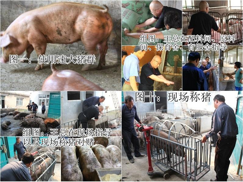 种猪饲养管理的共同原则