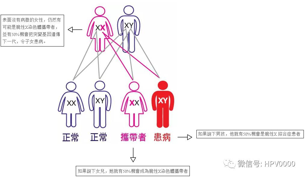 Y-染色体测试+脆性X综合症检测