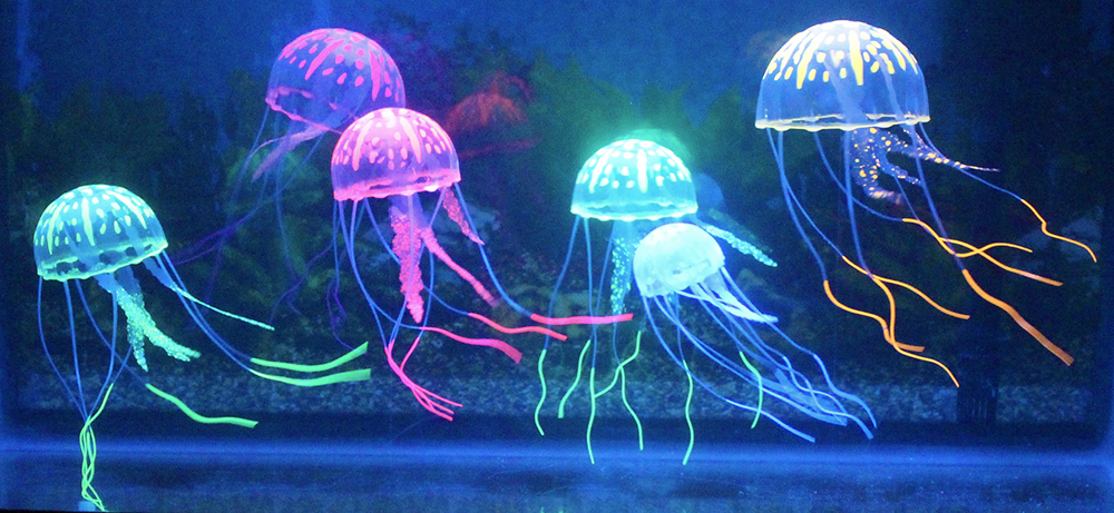 Picture of Jellyfish