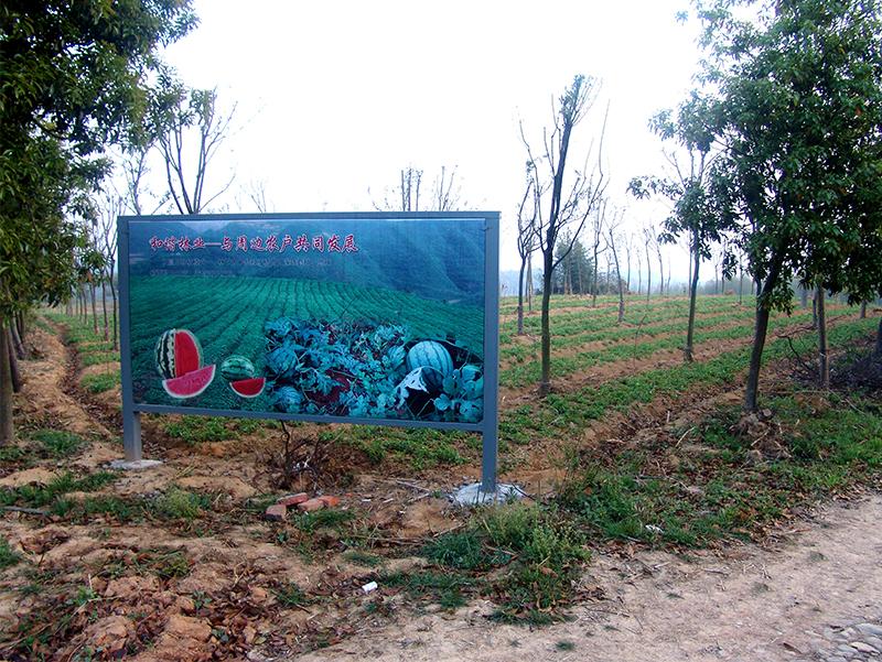 林下经济:西瓜种植