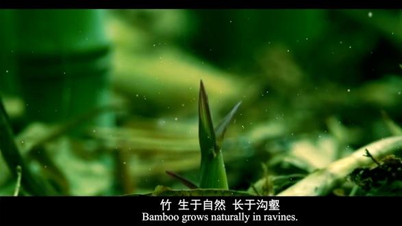 Bamboo fiber functions trend 2021