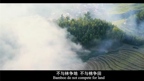 Bamboo fiber production