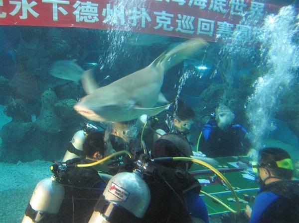 世界上潜水水下德州扑克比赛时间最长——福州潜水水下德州扑克比赛