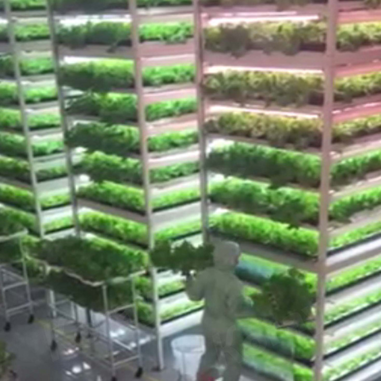120H 1.2m高功率城市农业植物工厂垂直种植水培灯