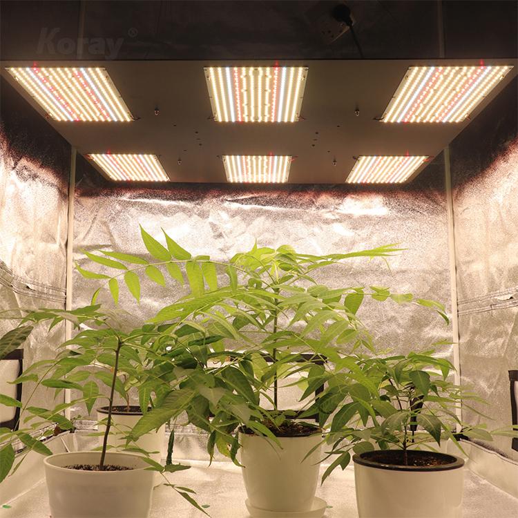 RX-LM301-312-K6 高PAR输出植物帐篷药用植物植物灯模组套件
