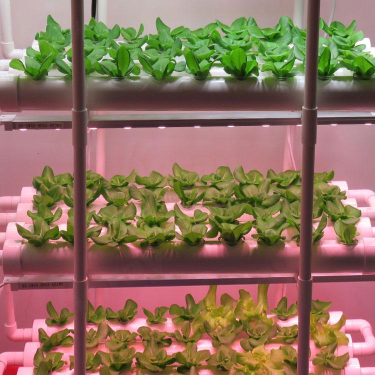 108室内垂直农业家用蔬菜种植水培系统
